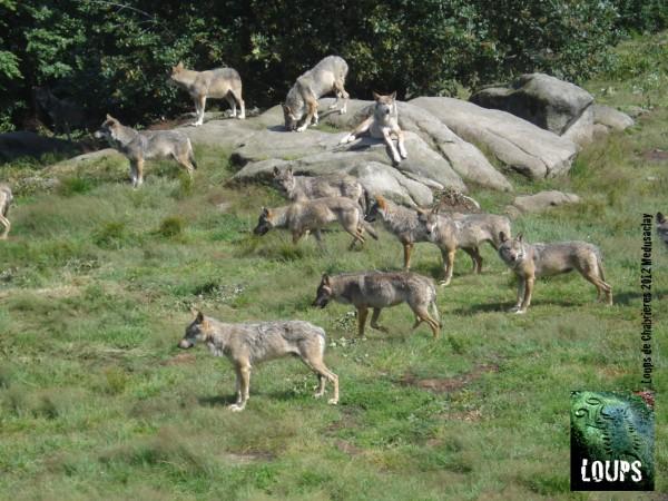loups_chabrières